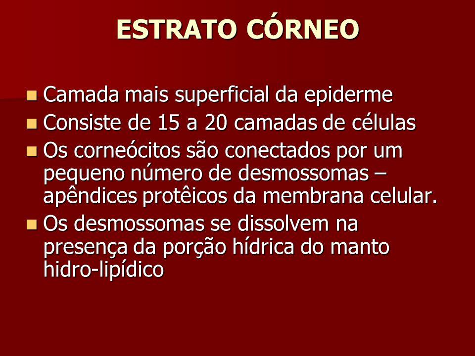 ESTRATO CÓRNEO Camada mais superficial da epiderme Camada mais superficial da epiderme Consiste de 15 a 20 camadas de células Consiste de 15 a 20 cama