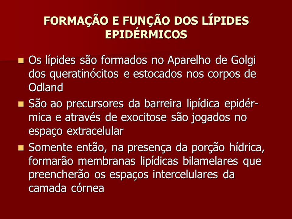 FORMAÇÃO E FUNÇÃO DOS LÍPIDES EPIDÉRMICOS Os lípides são formados no Aparelho de Golgi dos queratinócitos e estocados nos corpos de Odland Os lípides