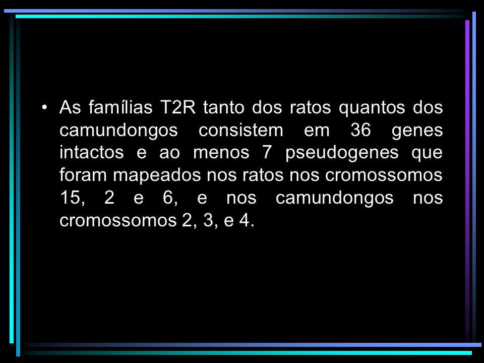 As famílias T2R tanto dos ratos quantos dos camundongos consistem em 36 genes intactos e ao menos 7 pseudogenes que foram mapeados nos ratos nos cromo