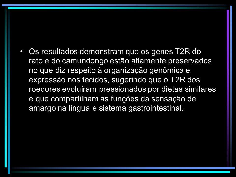 Os resultados demonstram que os genes T2R do rato e do camundongo estão altamente preservados no que diz respeito à organização genômica e expressão n