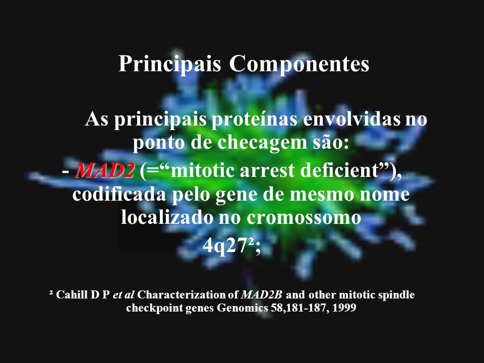 Principais Componentes As principais proteínas envolvidas no ponto de checagem são: MAD2 - MAD2 (=mitotic arrest deficient), codificada pelo gene de m