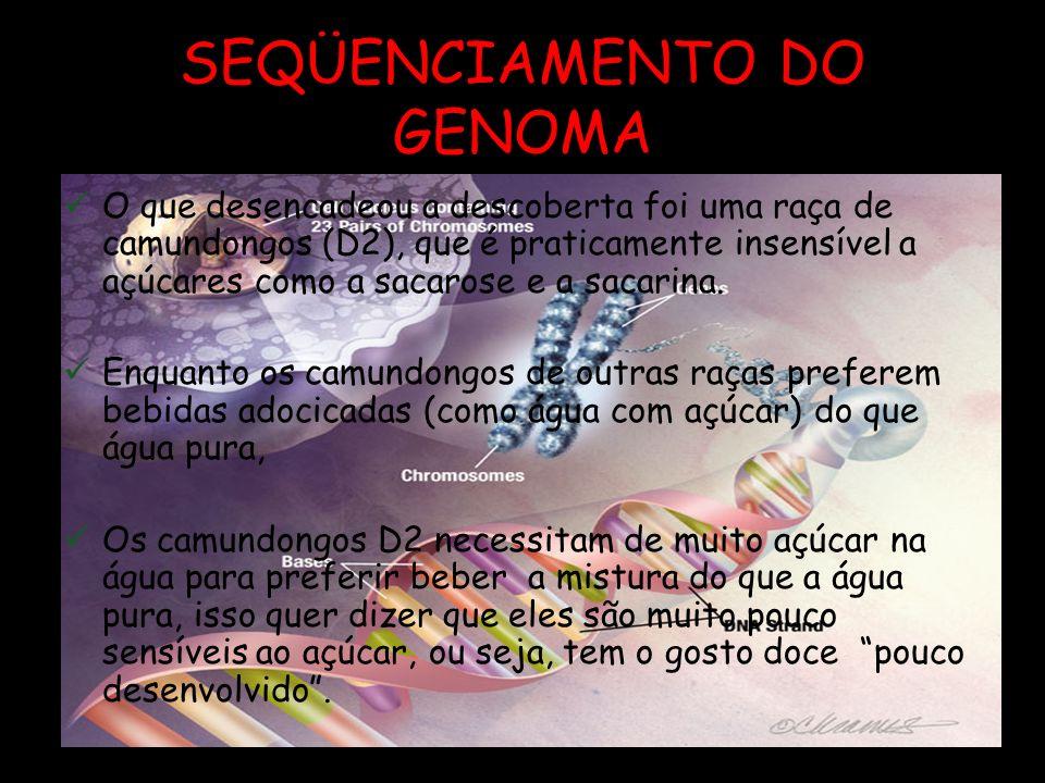 SEQÜENCIAMENTO DO GENOMA Maio de 2001 – Seqüenciamento do Genoma Humano Permitiu a identificação do primeiro gene para um receptor de açúcares do pala