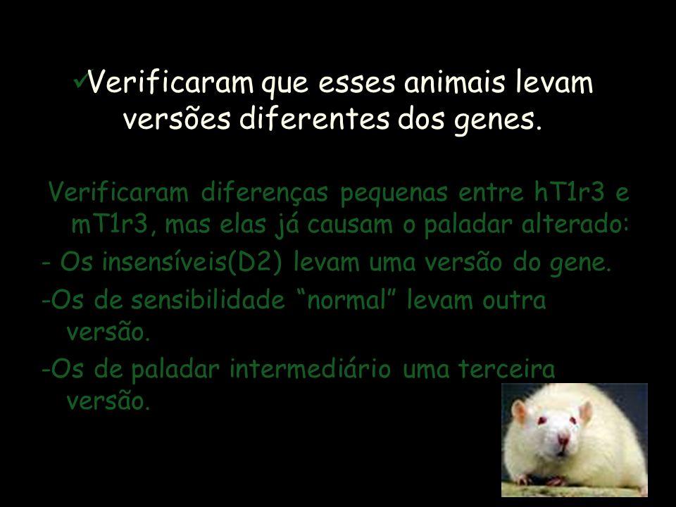 SEQÜENCIAMENTO DO GENOMA Esse pedaço da região do cromossomo 4 dos camundongos corresponde à região do cromossomo 1 humano. Equipes de estudo american