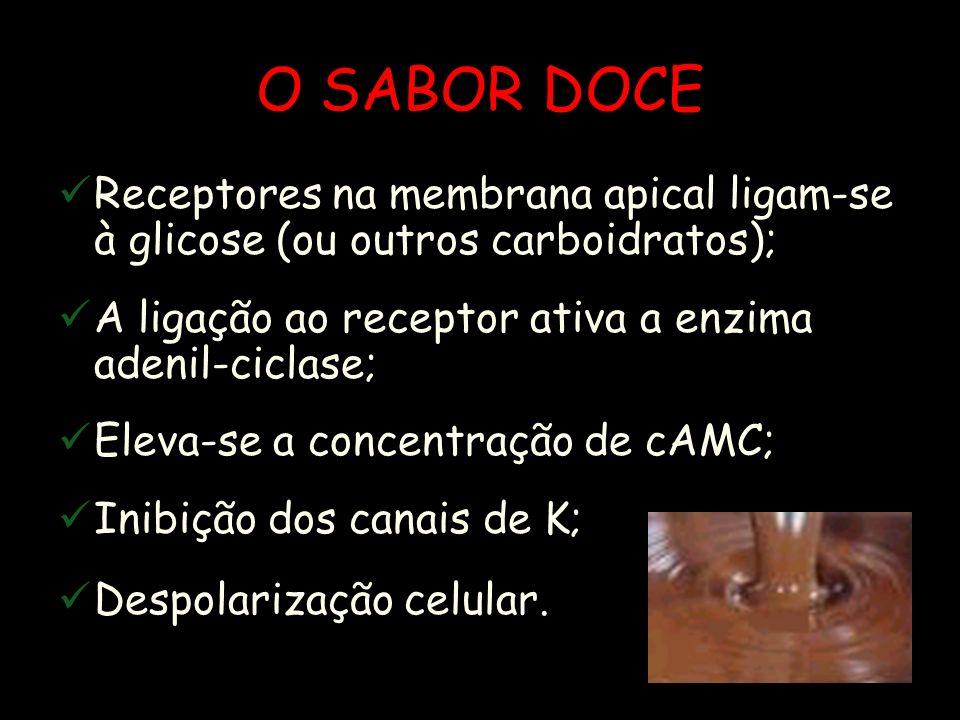 O SABOR DOCE Receptores na membrana apical ligam-se à glicose (ou outros carboidratos); A ligação ao receptor ativa a enzima adenil-ciclase; Eleva-se a concentração de cAMC; Inibição dos canais de K; Despolarização celular.