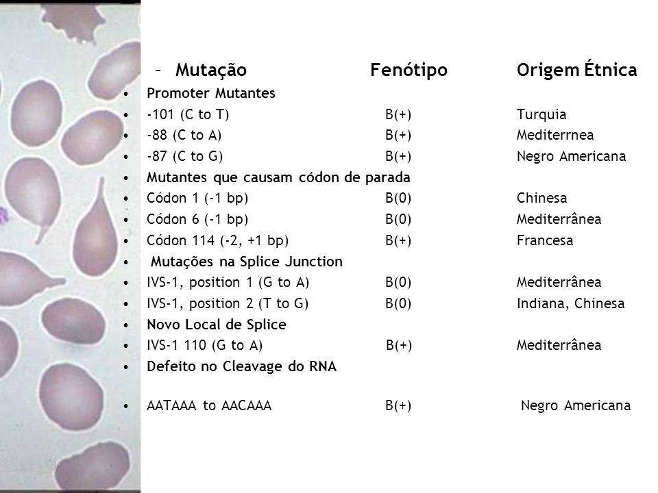 –Mutação Fenótipo Origem Étnica Promoter Mutantes -101 (C to T) B(+)Turquia -88 (C to A) B(+)Mediterrnea -87 (C to G) B(+) Negro Americana Mutantes qu