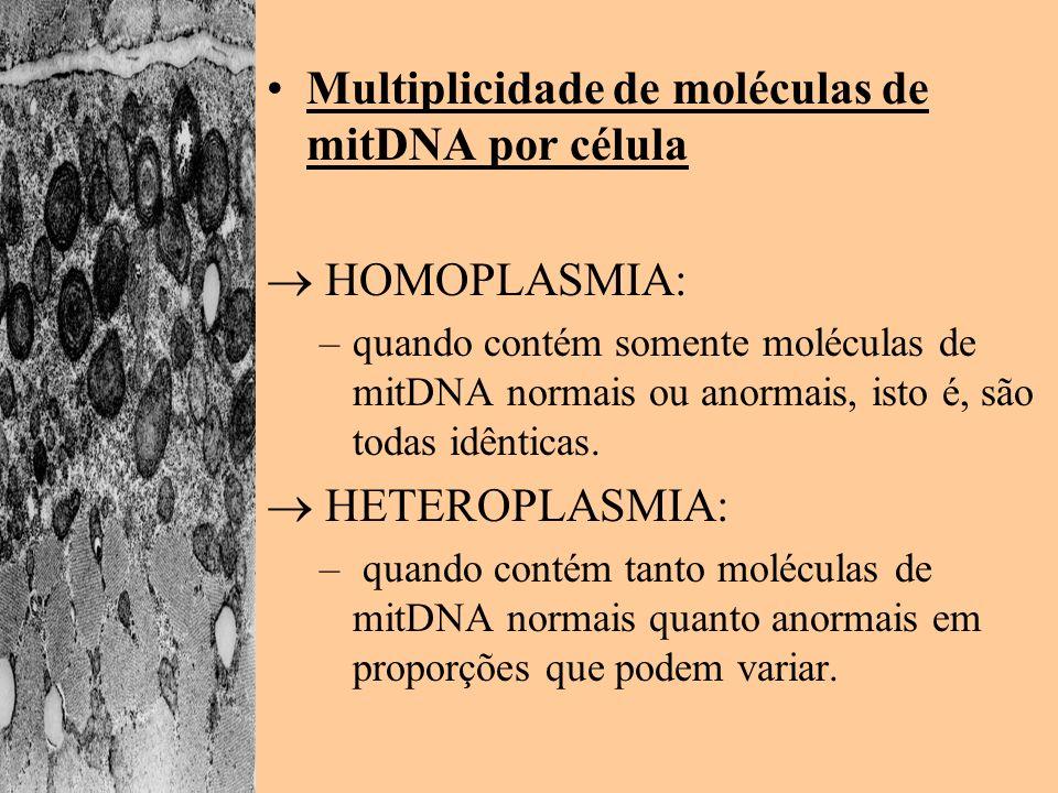 Multiplicidade de moléculas de mitDNA por célula HOMOPLASMIA: –quando contém somente moléculas de mitDNA normais ou anormais, isto é, são todas idênti