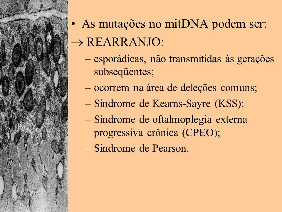As mutações no mitDNA podem ser: REARRANJO: –esporádicas, não transmitidas às gerações subseqüentes; –ocorrem na área de deleções comuns; –Síndrome de