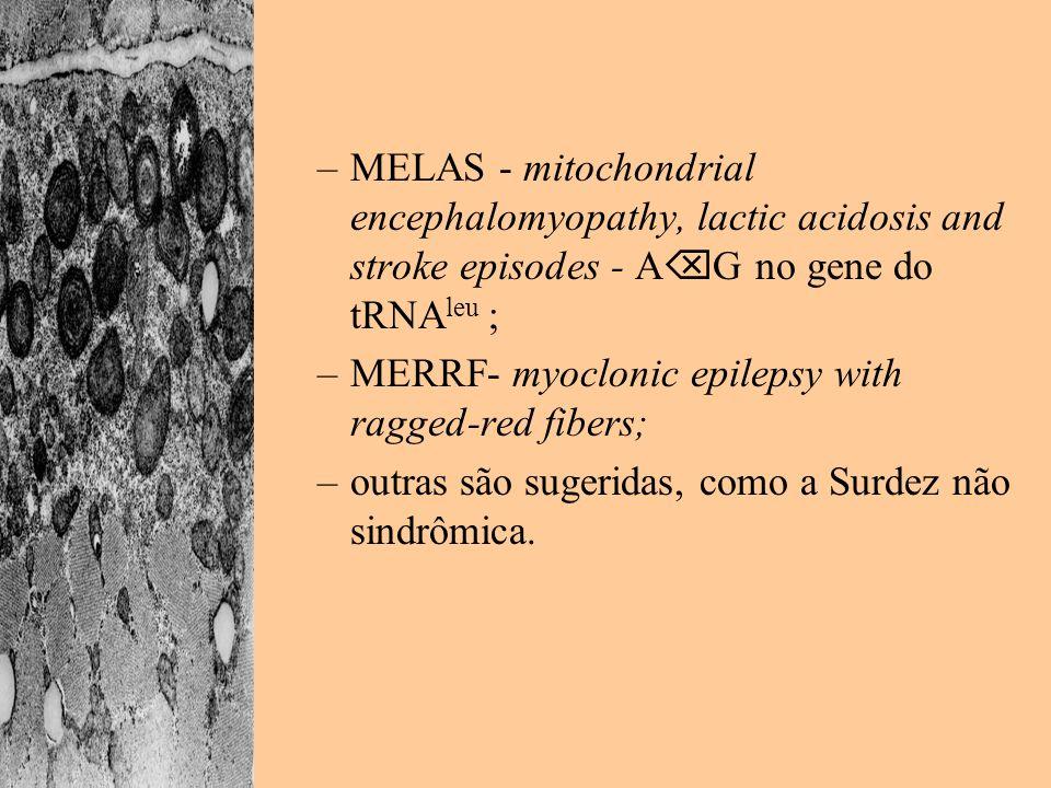–MELAS - mitochondrial encephalomyopathy, lactic acidosis and stroke episodes - A G no gene do tRNA leu ; –MERRF- myoclonic epilepsy with ragged-red f