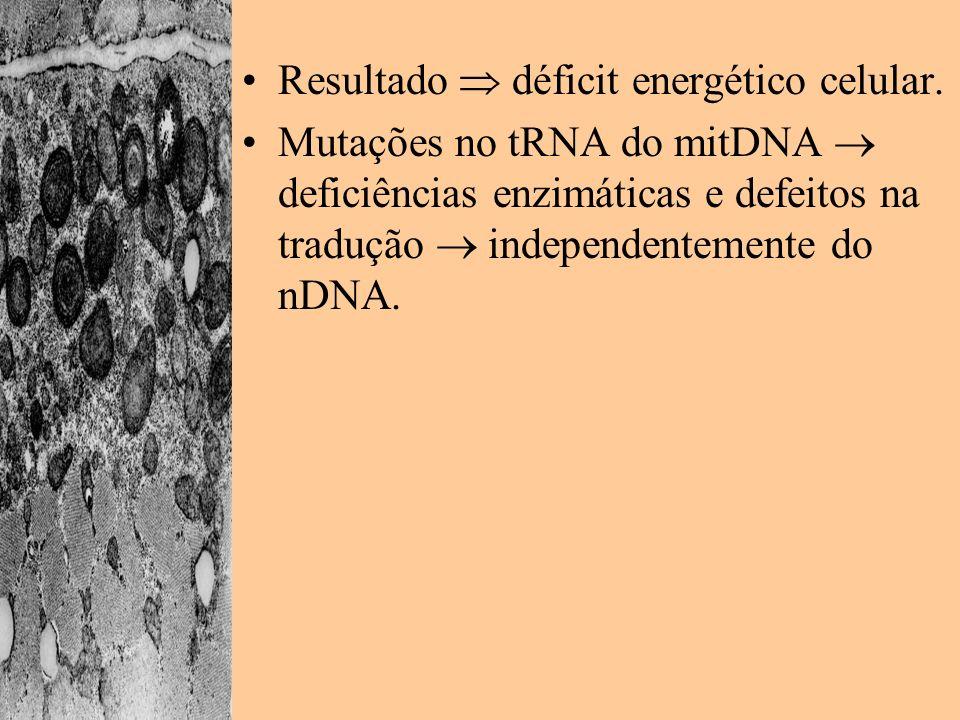 Resultado déficit energético celular. Mutações no tRNA do mitDNA deficiências enzimáticas e defeitos na tradução independentemente do nDNA.