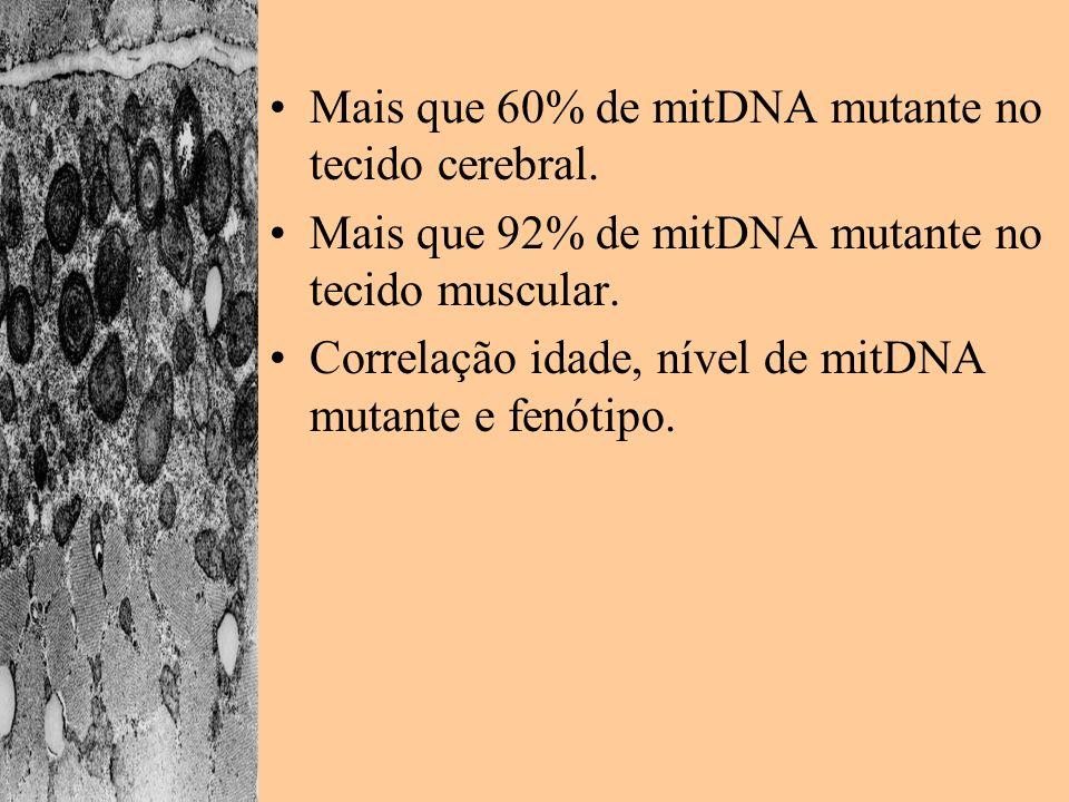 Mais que 60% de mitDNA mutante no tecido cerebral. Mais que 92% de mitDNA mutante no tecido muscular. Correlação idade, nível de mitDNA mutante e fenó