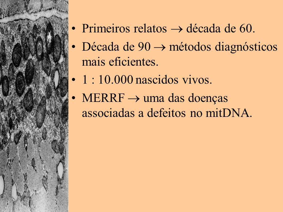 Primeiros relatos década de 60. Década de 90 métodos diagnósticos mais eficientes. 1 : 10.000 nascidos vivos. MERRF uma das doenças associadas a defei