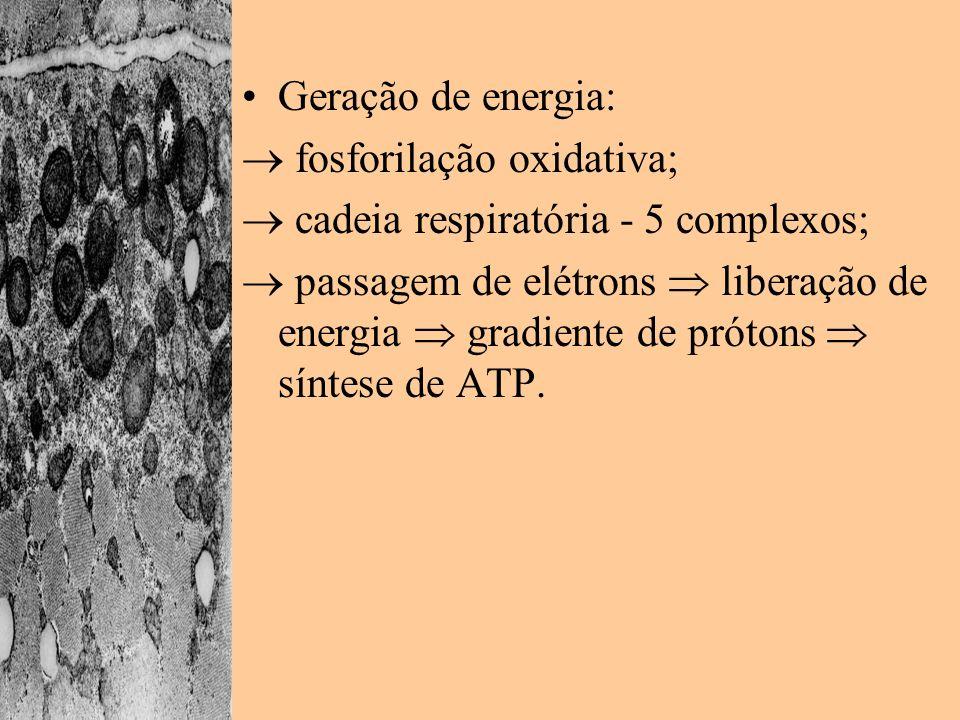 Geração de energia: fosforilação oxidativa; cadeia respiratória - 5 complexos; passagem de elétrons liberação de energia gradiente de prótons síntese