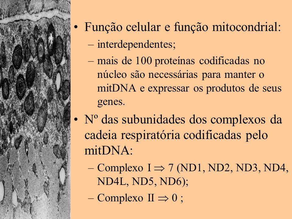 Função celular e função mitocondrial: –interdependentes; –mais de 100 proteínas codificadas no núcleo são necessárias para manter o mitDNA e expressar