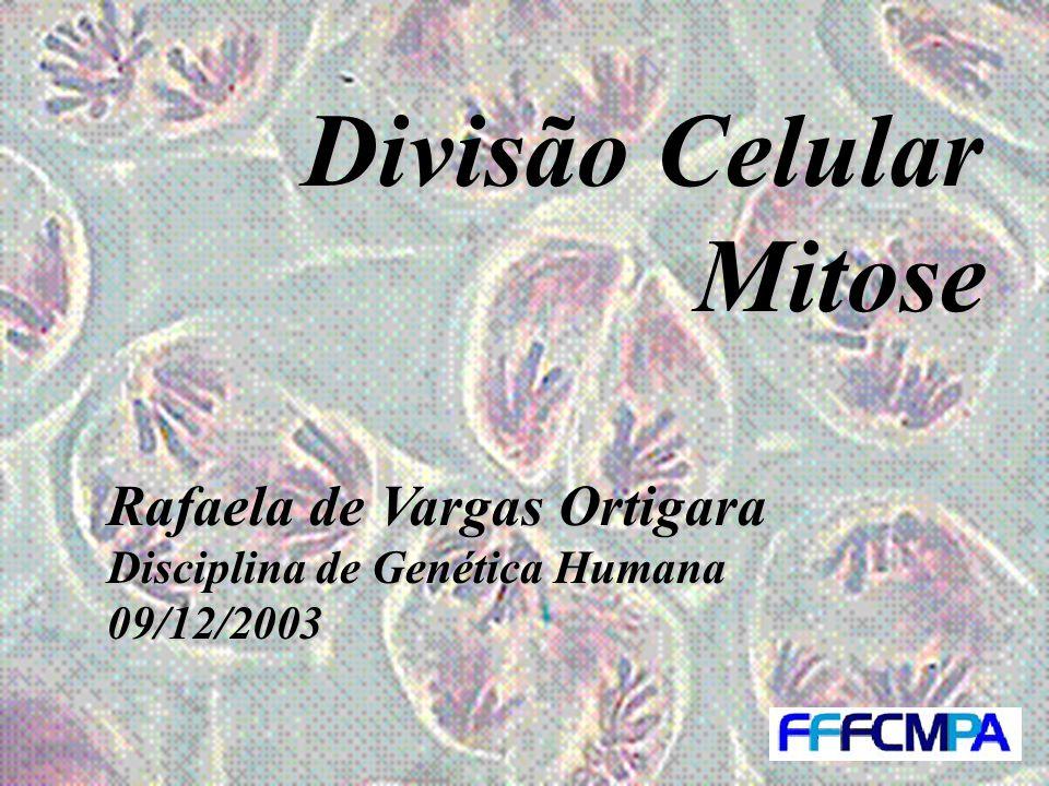 Divisão Celular Mitose Rafaela de Vargas Ortigara Disciplina de Genética Humana 09/12/2003