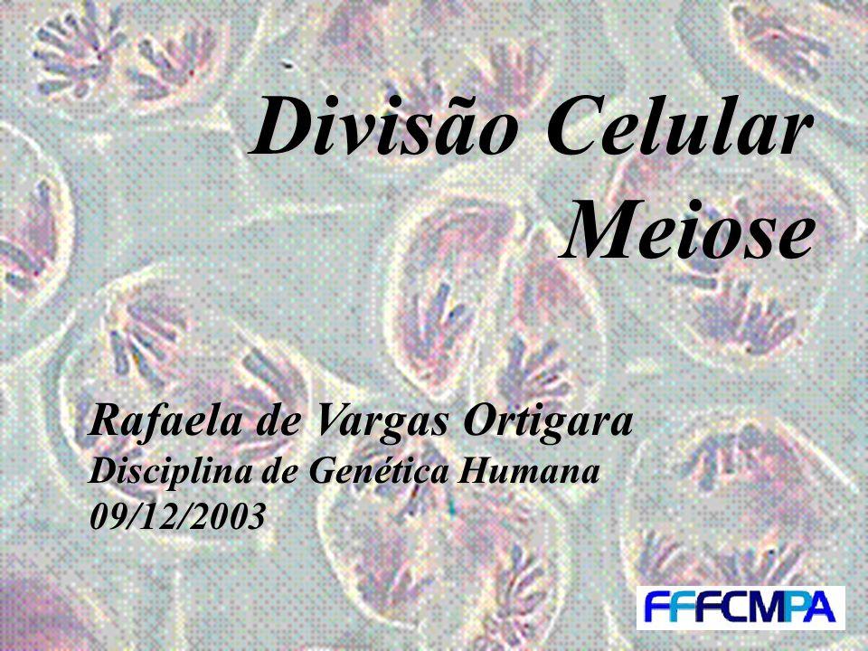 Divisão Celular Meiose Rafaela de Vargas Ortigara Disciplina de Genética Humana 09/12/2003