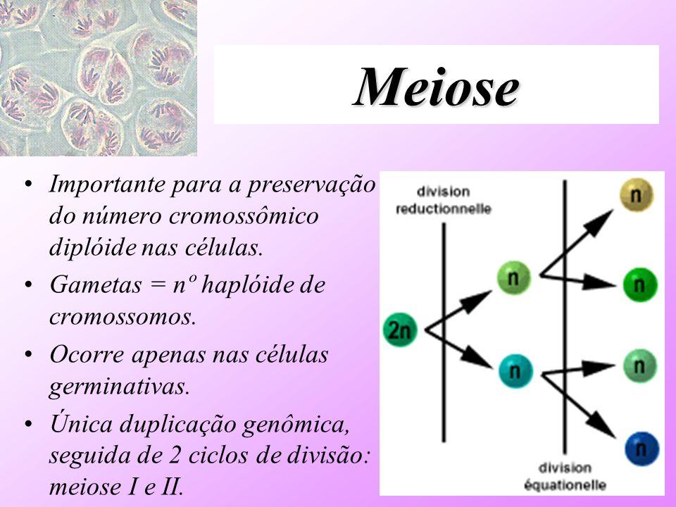 Meiose Importante para a preservação do número cromossômico diplóide nas células. Gametas = nº haplóide de cromossomos. Ocorre apenas nas células germ