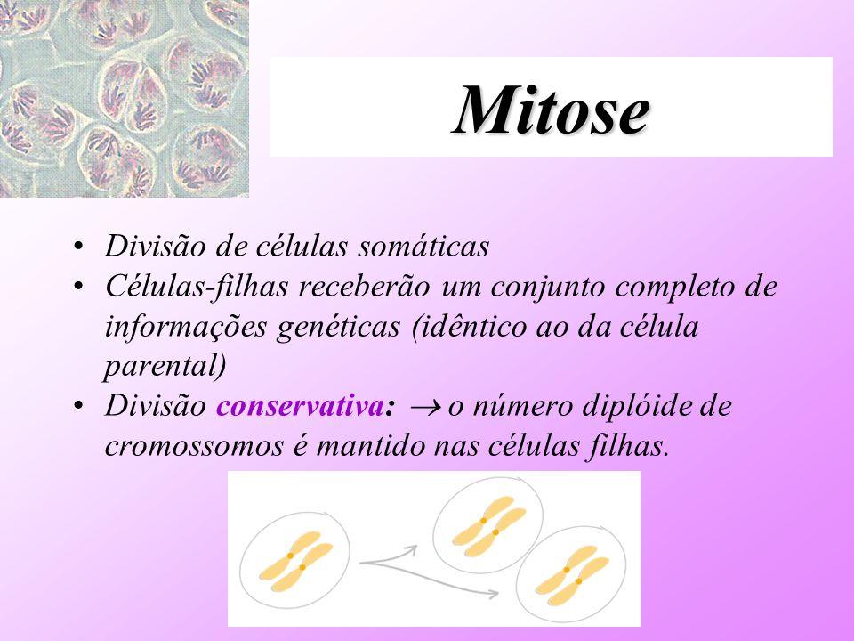 Mitose Divisão de células somáticas Células-filhas receberão um conjunto completo de informações genéticas (idêntico ao da célula parental) Divisão co