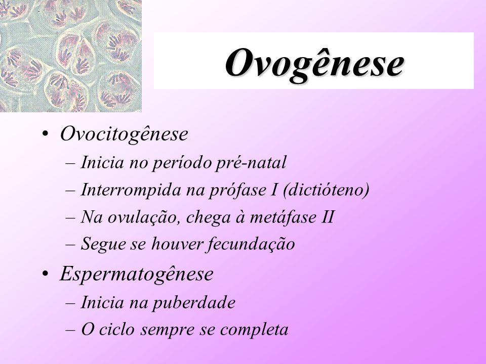 Ovogênese Ovocitogênese –Inicia no período pré-natal –Interrompida na prófase I (dictióteno) –Na ovulação, chega à metáfase II –Segue se houver fecund