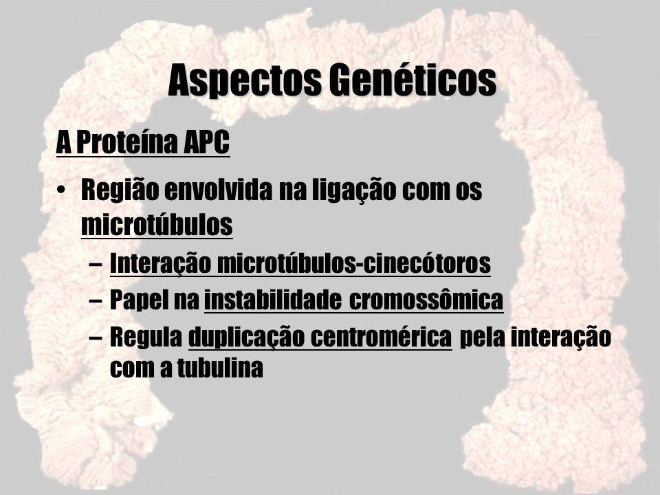 Aspectos Genéticos A Proteína APC Região envolvida na ligação com os microtúbulos –Interação microtúbulos-cinecótoros –Papel na instabilidade cromossô