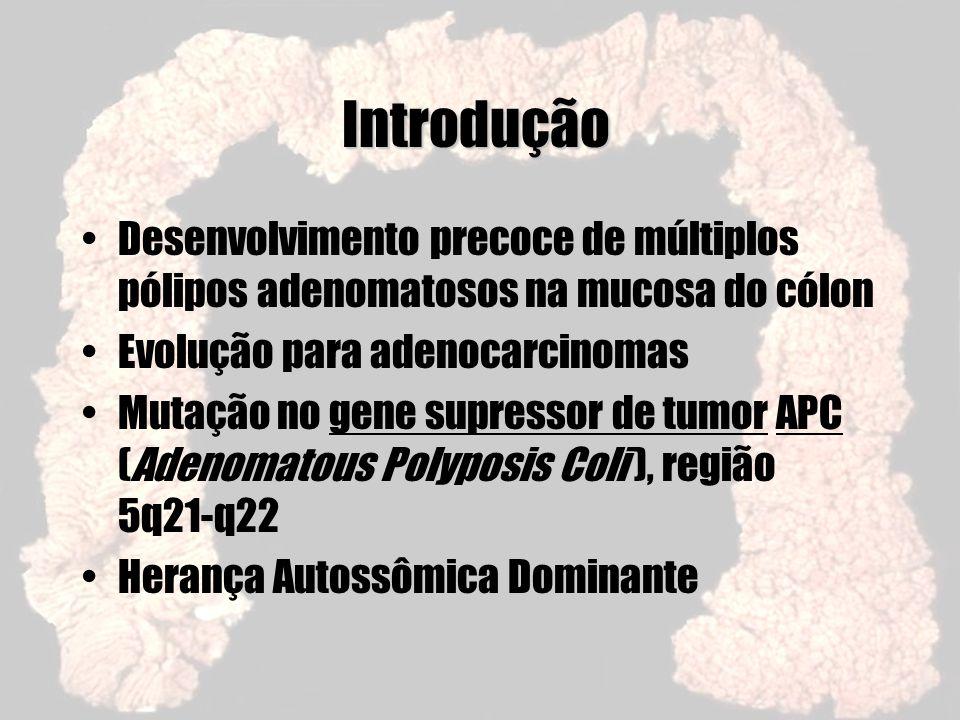 Aspectos Genéticos A Proteína APC –Os enterócitos da base das criptas praticamente não têm APC ( -catenina ) –A quantidade aumenta nas células da superfície das criptas, conforme maturação ( -catenina ) –Os enterócitos da superfície luminal são sempre positivos –Níveis de -catenina variam inversamente com os da APC
