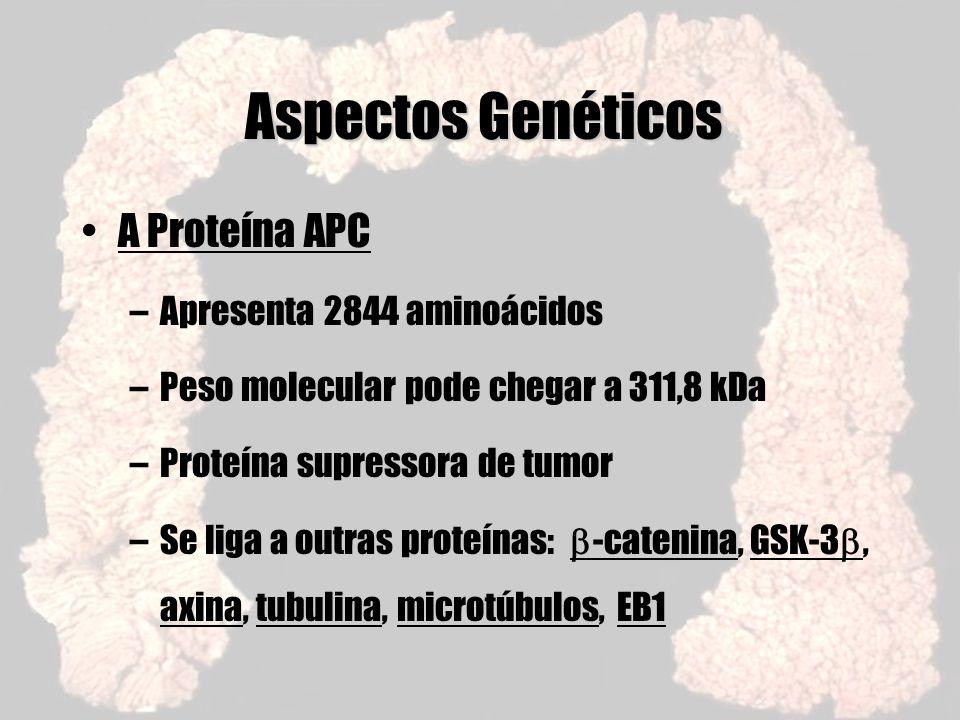 Aspectos Genéticos A Proteína APC –Apresenta 2844 aminoácidos –Peso molecular pode chegar a 311,8 kDa –Proteína supressora de tumor –Se liga a outras
