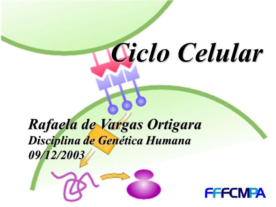 Rafaela de Vargas Ortigara Disciplina de Genética Humana 09/12/2003 Ciclo Celular