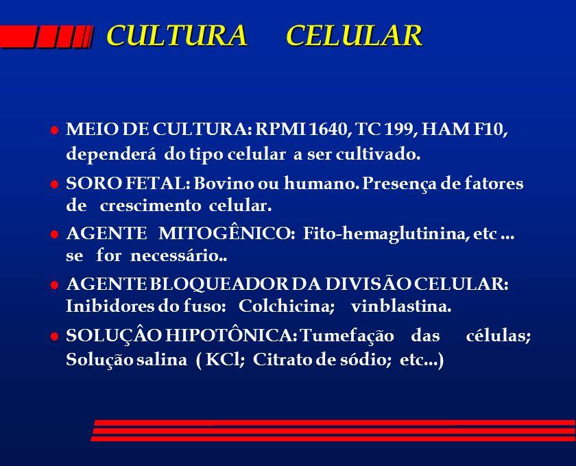 CULTURA CELULAR l MEIO DE CULTURA: RPMI 1640, TC 199, HAM F10, dependerá do tipo celular a ser cultivado. l SORO FETAL: Bovino ou humano. Presença de