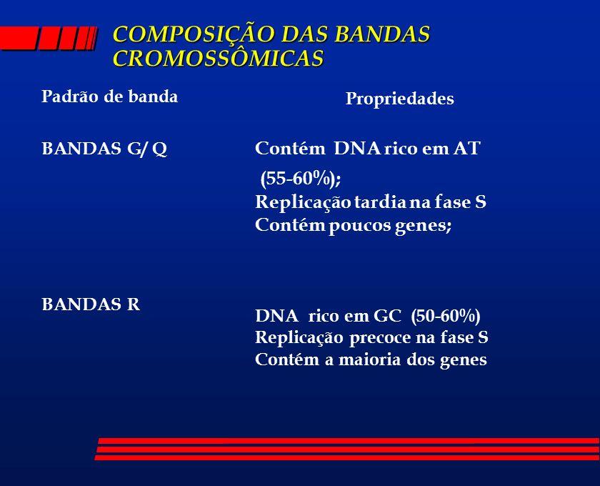 COMPOSIÇÃO DAS BANDAS CROMOSSÔMICAS Padrão de banda BANDAS G/ Q BANDAS R Propriedades Contém DNA rico em AT (55-60%); Replicação tardia na fase S Cont