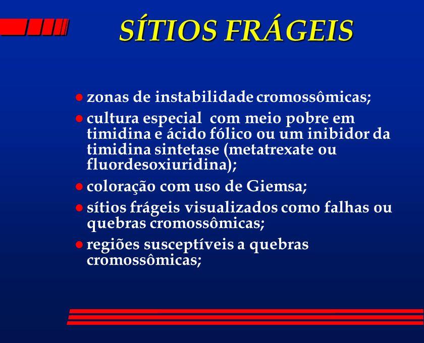SÍTIOS FRÁGEIS l zonas de instabilidade cromossômicas; l cultura especial com meio pobre em timidina e ácido fólico ou um inibidor da timidina sinteta