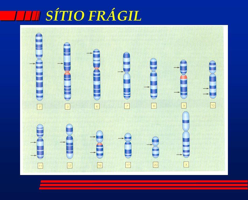 SÍTIO FRÁGIL