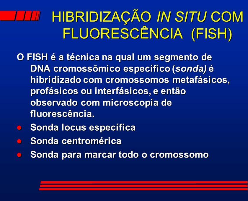 HIBRIDIZAÇÃO IN SITU COM FLUORESCÊNCIA (FISH) O FISH é a técnica na qual um segmento de DNA cromossômico específico (sonda) é hibridizado com cromosso