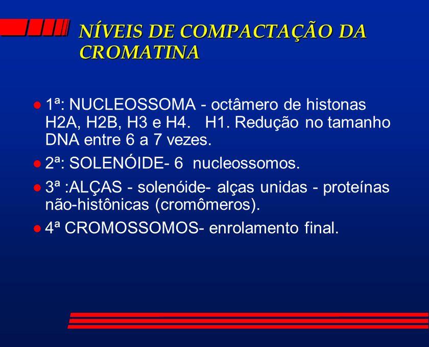 NÍVEIS DE COMPACTAÇÃO DA CROMATINA l 1ª: NUCLEOSSOMA - octâmero de histonas H2A, H2B, H3 e H4. H1. Redução no tamanho DNA entre 6 a 7 vezes. l 2ª: SOL