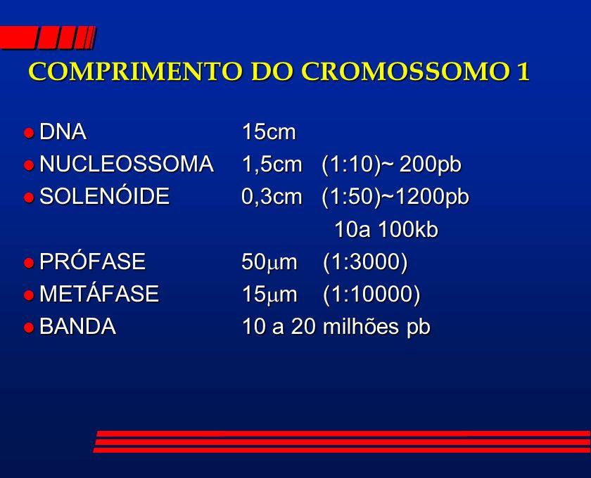 COMPRIMENTO DO CROMOSSOMO 1 l DNA15cm l NUCLEOSSOMA1,5cm (1:10)~ 200pb l SOLENÓIDE0,3cm (1:50)~1200pb 10a 100kb 10a 100kb l PRÓFASE50 m (1:3000) l MET