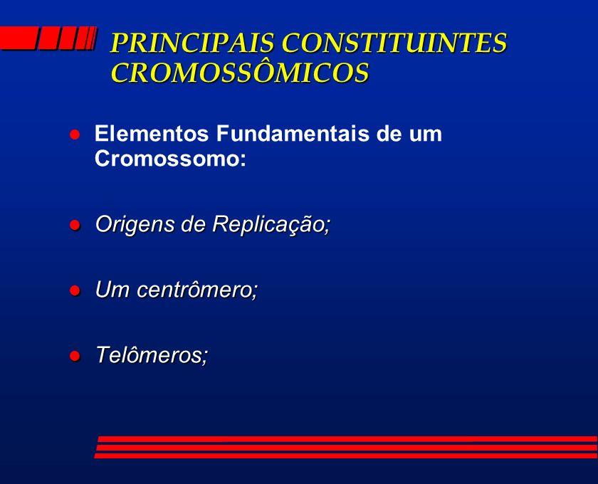 PRINCIPAIS CONSTITUINTES CROMOSSÔMICOS l Elementos Fundamentais de um Cromossomo: l Origens de Replicação; l Um centrômero; l Telômeros;