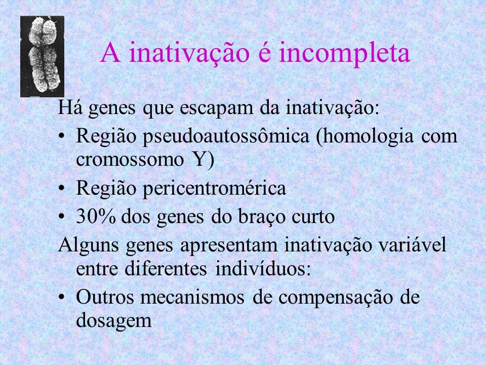 A inativação é incompleta Há genes que escapam da inativação: Região pseudoautossômica (homologia com cromossomo Y) Região pericentromérica 30% dos ge