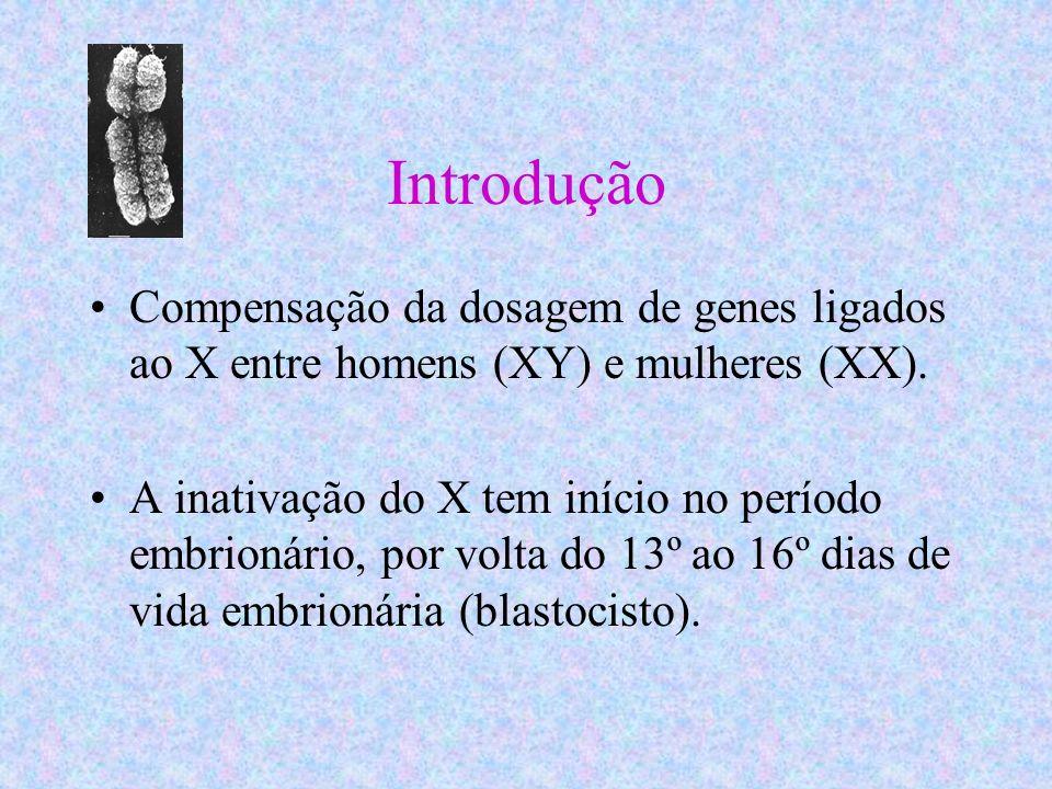 Introdução Compensação da dosagem de genes ligados ao X entre homens (XY) e mulheres (XX). A inativação do X tem início no período embrionário, por vo