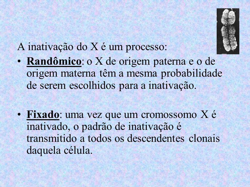 A inativação do X é um processo: Randômico: o X de origem paterna e o de origem materna têm a mesma probabilidade de serem escolhidos para a inativaçã