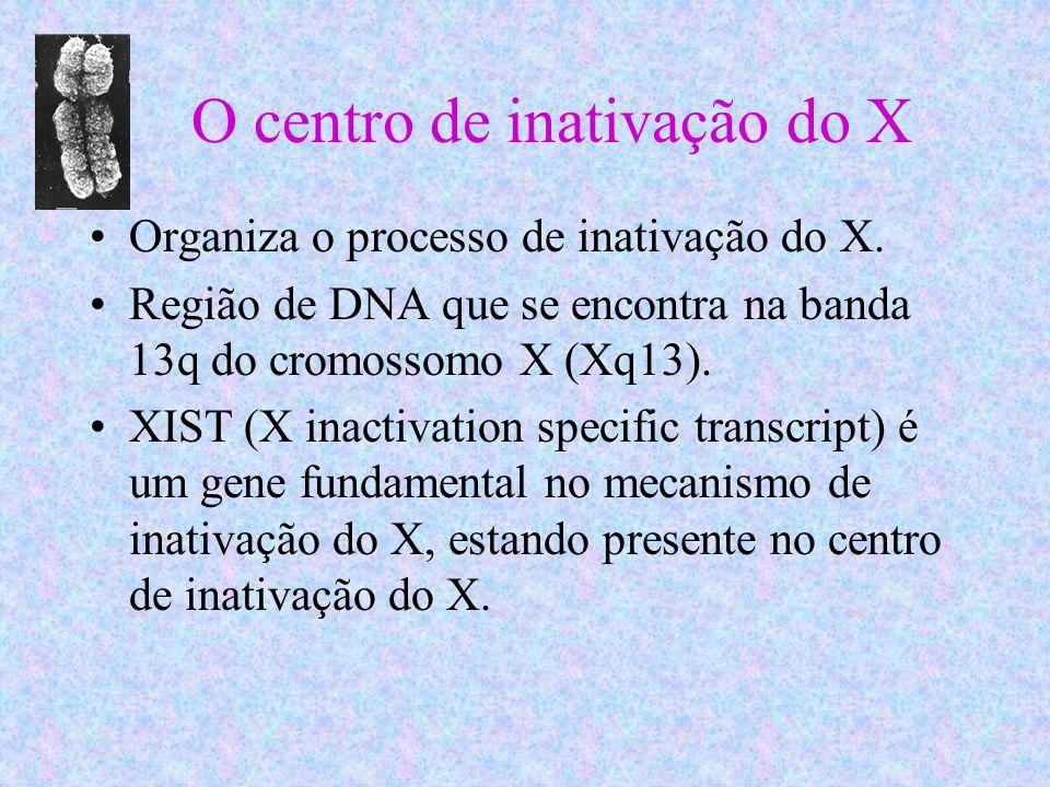 O centro de inativação do X Organiza o processo de inativação do X. Região de DNA que se encontra na banda 13q do cromossomo X (Xq13). XIST (X inactiv