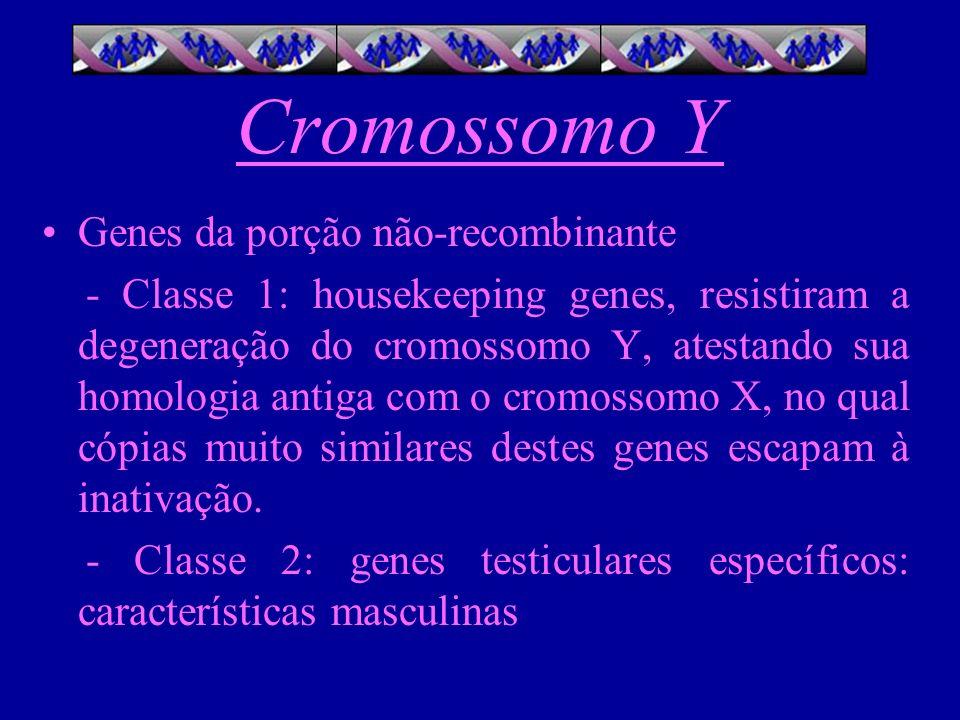 Cromossomo Y Genes da porção não-recombinante - Classe 1: housekeeping genes, resistiram a degeneração do cromossomo Y, atestando sua homologia antiga