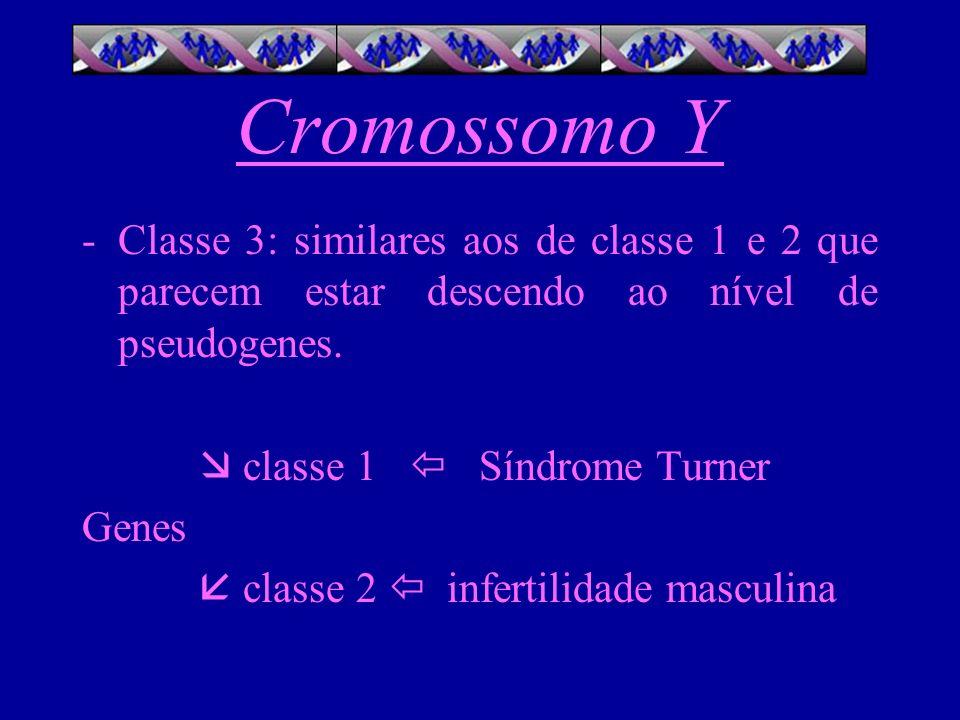 Cromossomo Y -Classe 3: similares aos de classe 1 e 2 que parecem estar descendo ao nível de pseudogenes. classe 1 Síndrome Turner Genes classe 2 infe