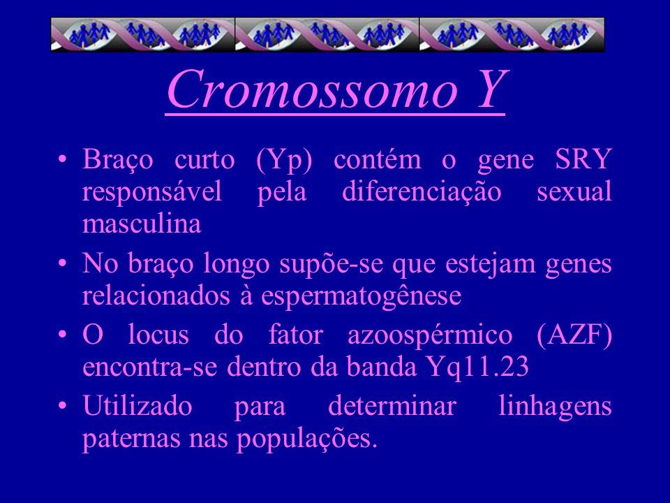Cromossomo Y Braço curto (Yp) contém o gene SRY responsável pela diferenciação sexual masculina No braço longo supõe-se que estejam genes relacionados