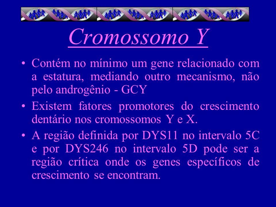 Cromossomo Y Contém no mínimo um gene relacionado com a estatura, mediando outro mecanismo, não pelo androgênio - GCY Existem fatores promotores do cr