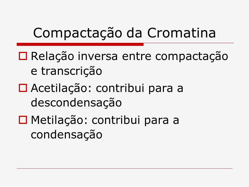 Compactação da Cromatina Relação inversa entre compactação e transcrição Acetilação: contribui para a descondensação Metilação: contribui para a conde