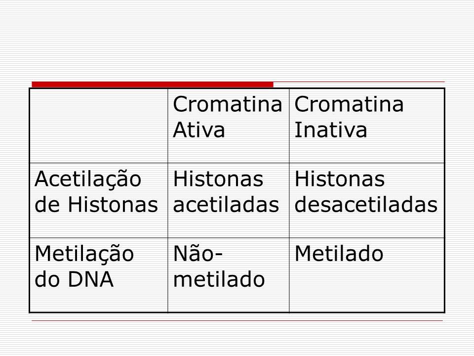 Cromatina Ativa Cromatina Inativa Acetilação de Histonas Histonas acetiladas Histonas desacetiladas Metilação do DNA Não- metilado Metilado