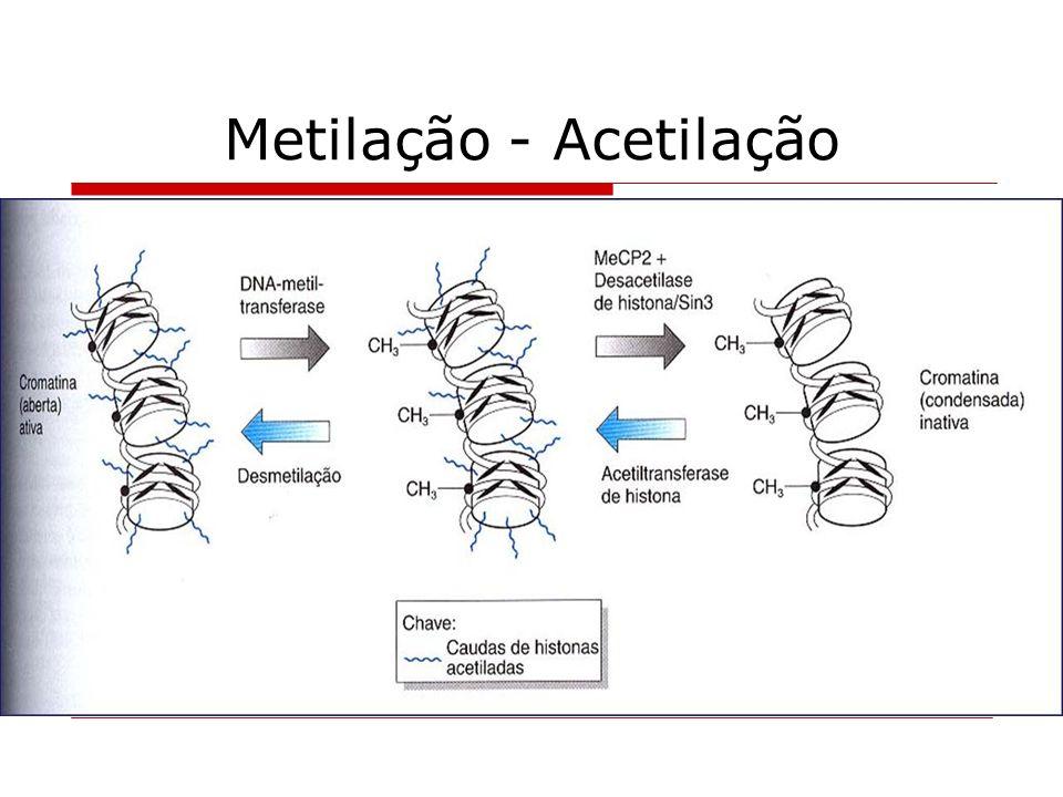 Metilação - Acetilação
