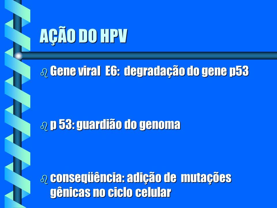 AÇÃO DO HPV b Gene viral E6: degradação do gene p53 b p 53: guardião do genoma b conseqüência: adição de mutações gênicas no ciclo celular