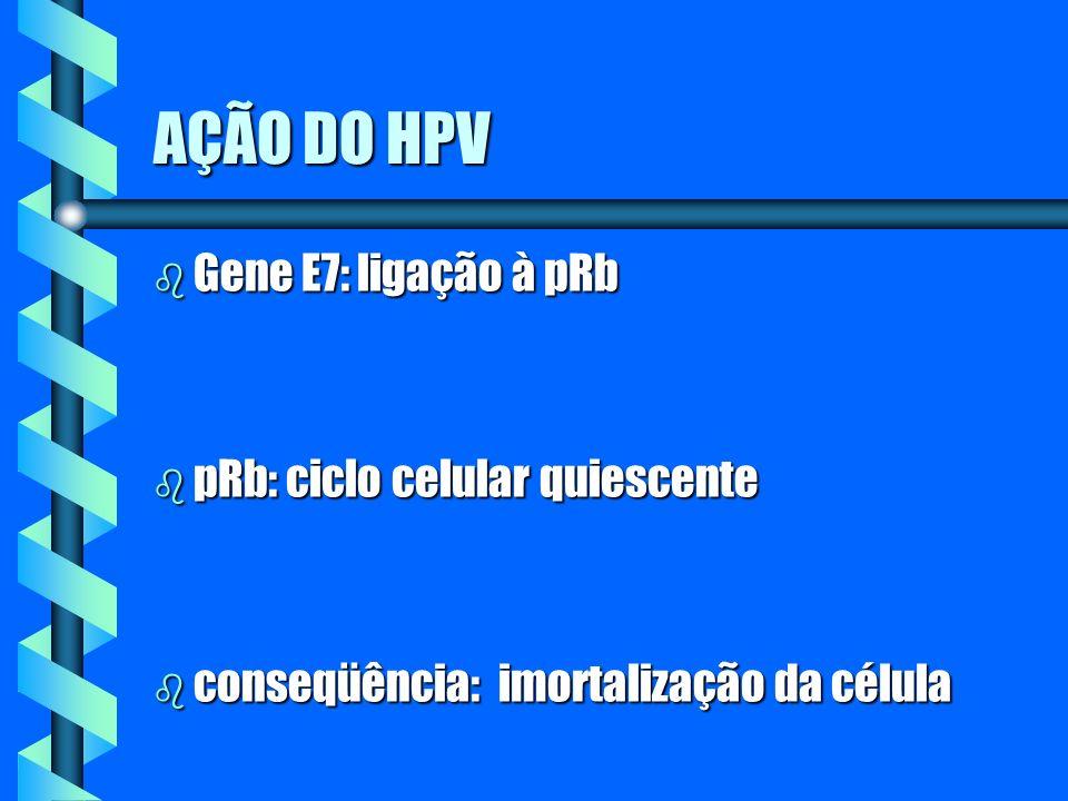 AÇÃO DO HPV b Gene E7: ligação à pRb b pRb: ciclo celular quiescente b conseqüência: imortalização da célula