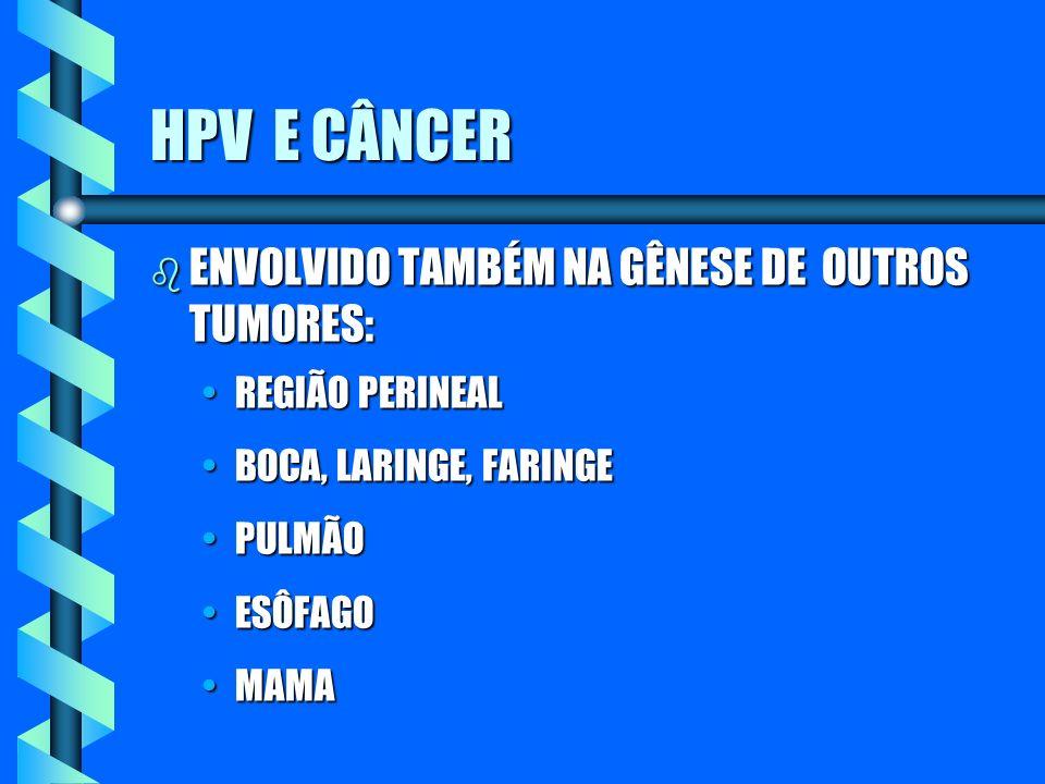 HPV E CÂNCER b ENVOLVIDO TAMBÉM NA GÊNESE DE OUTROS TUMORES: REGIÃO PERINEALREGIÃO PERINEAL BOCA, LARINGE, FARINGEBOCA, LARINGE, FARINGE PULMÃOPULMÃO