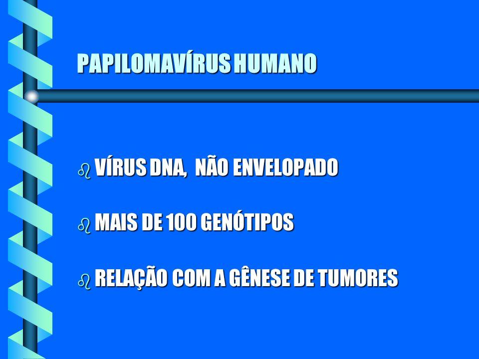 PAPILOMAVÍRUS HUMANO b VÍRUS DNA, NÃO ENVELOPADO b MAIS DE 100 GENÓTIPOS b RELAÇÃO COM A GÊNESE DE TUMORES