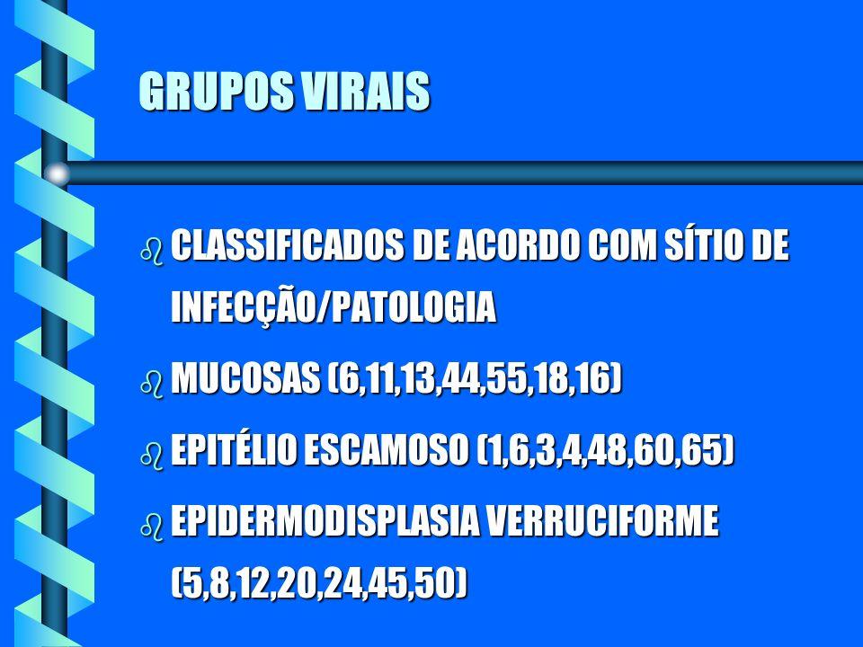 GRUPOS VIRAIS b CLASSIFICADOS DE ACORDO COM SÍTIO DE INFECÇÃO/PATOLOGIA b MUCOSAS (6,11,13,44,55,18,16) b EPITÉLIO ESCAMOSO (1,6,3,4,48,60,65) b EPIDE